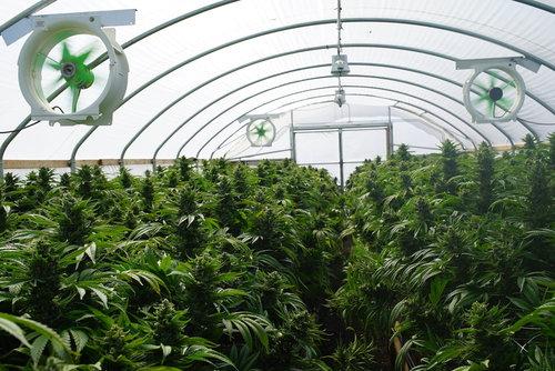 Holland-hydroponics-Ventilation