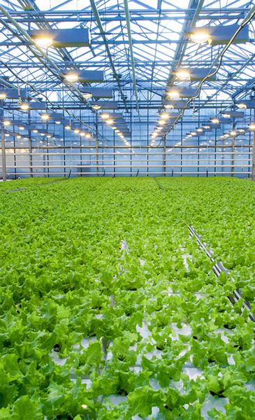 custom-projects-holland-hydroponics-projects