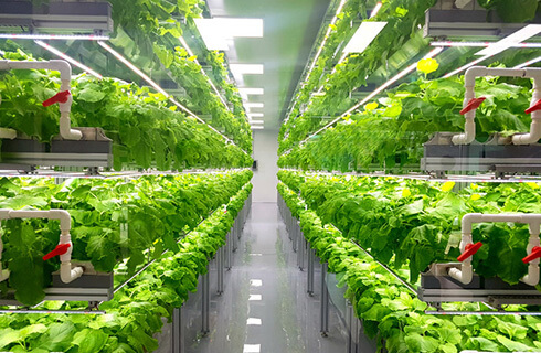 holland-hydroponics-vertical-farming