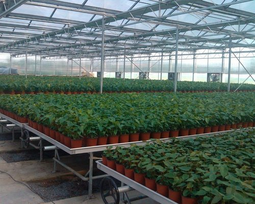 Holland-Hydroponics-rolling-benches